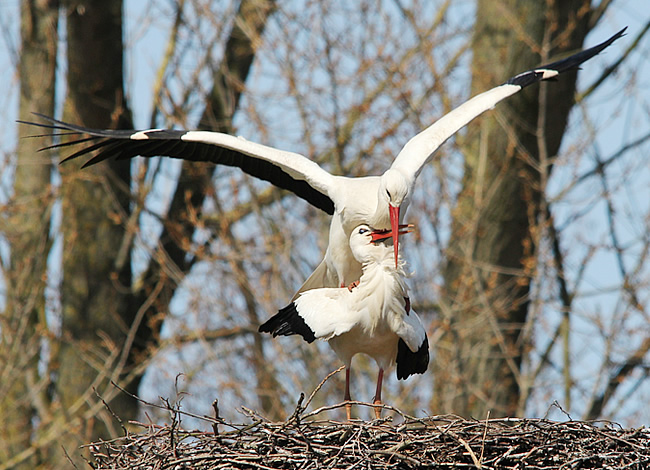 Tiere Storch